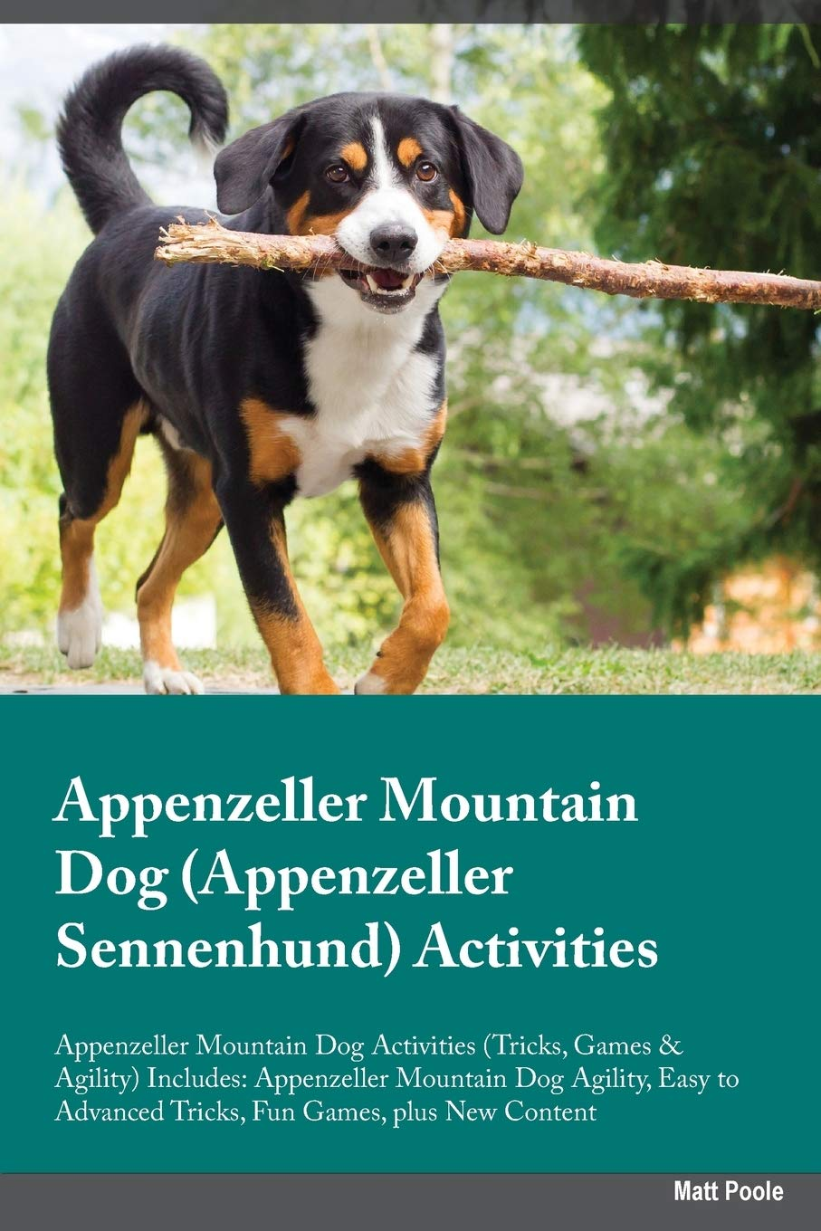 Buy Appenzeller Mountain Dog Appenzeller Sennenhund