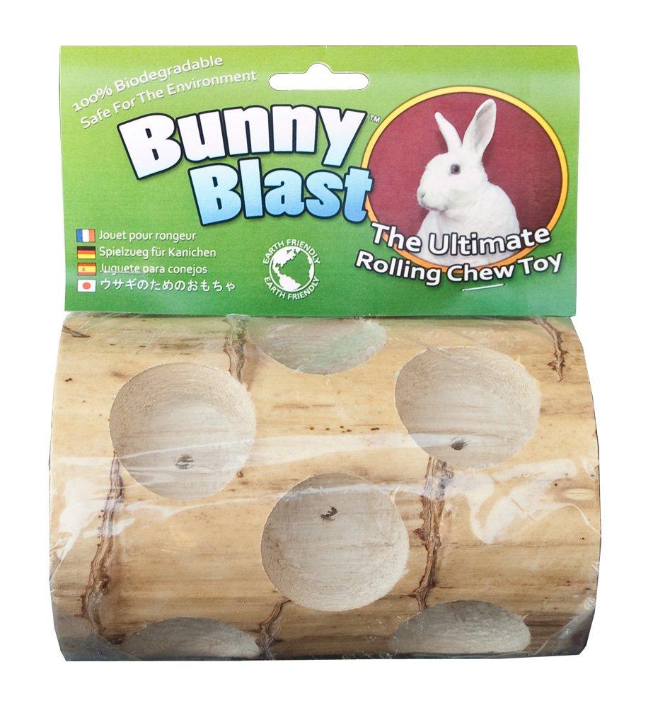 having bunnies as pets
