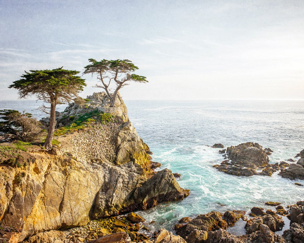 Image result for Lone Cypress Tree