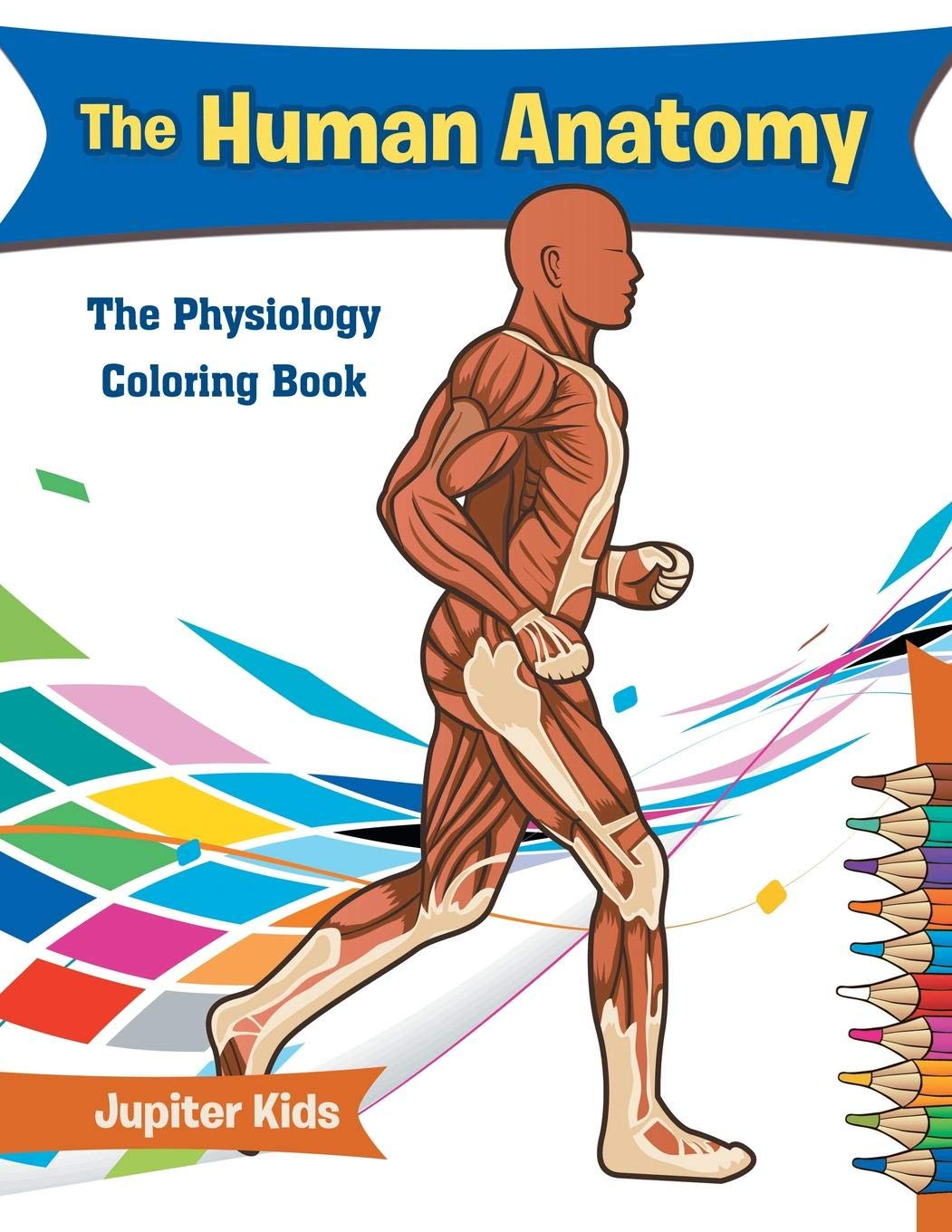 The Human Anatomy The Physiology Coloring Book Jupiter Kids
