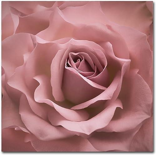 Misty Rose Pink Rose