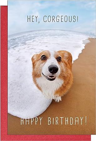 Amazon Com Corgi Birthday Card Corgeous Dog Bday Card For Husband Boyfriend Friend Corgi Lover Funny Card Office Products