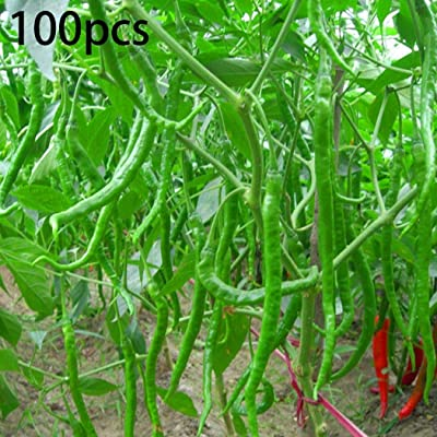 Determina Garden - 100PCS Annual Bonsai Giant Pepper Seeds Hot Chili Vegetable Plant Seeds Vegetables: Clothing