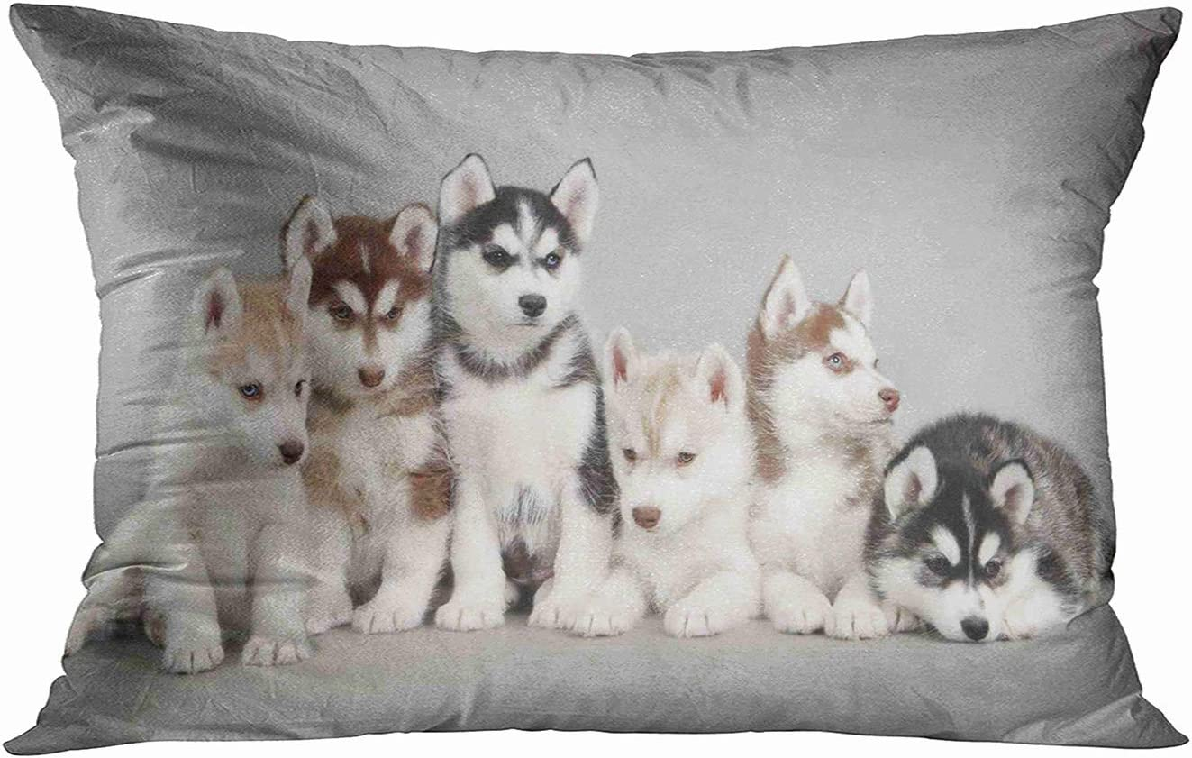 Tarolo Siberian Husky Puppies Pillow Case Size 20x30 Inches Two Sided Print