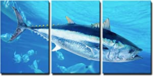 "wall26 - 3 Piece Canvas Wall Art - Bluefin Tuna Thunnus Thynnus Saltwater Fish in Mediterranean - Modern Home Art Stretched and Framed Ready to Hang - 24""x36""x3 Panels"