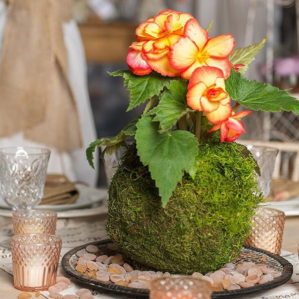 D DOLITY 3 Pcs Holder Vaso Creativo Palla Muschio Piante Fiori Bonsai Giardino Decorative Giardinaggio Verde