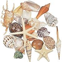Jangostor 21 PCS Conchas de mar medianas Conchas de mar de playa mixtas, varios tamaños Conchas de mar de colores…