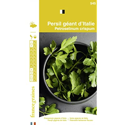 Seed Bag Giant Parsley Italy France Graines : Garden & Outdoor