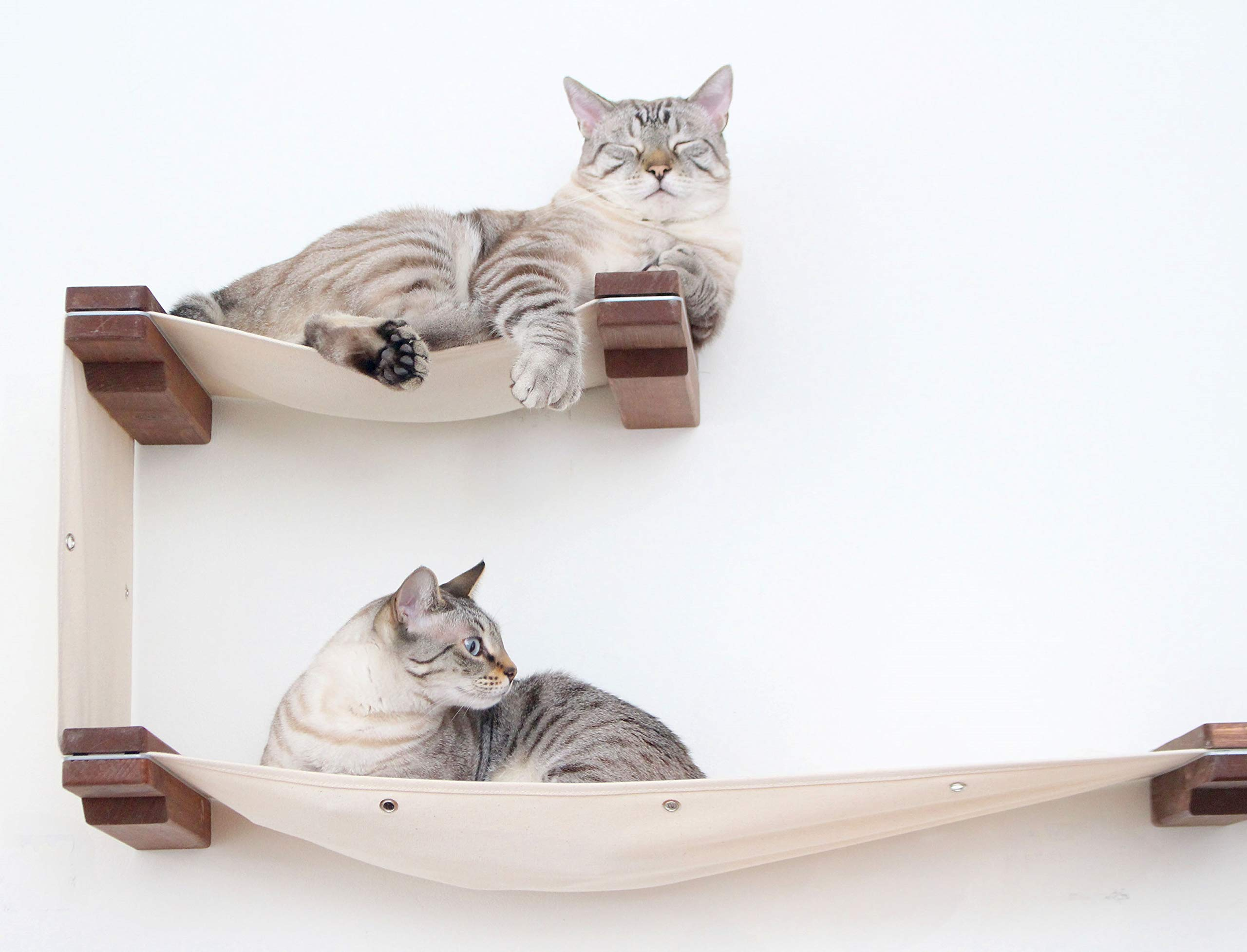 CatastrophiCreations Cat Double Decker Wall Mounted Lounge and Play Furniture Cat Tree Shelves - Onyx/Natural, One Size 1