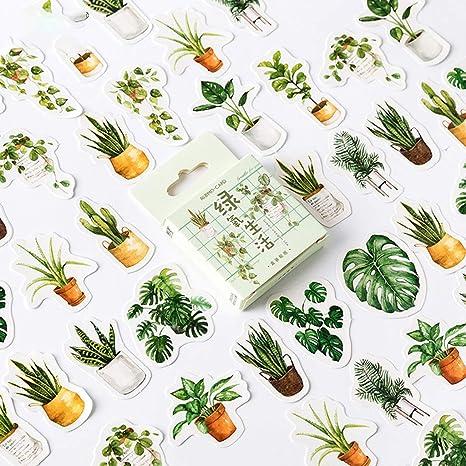 Kafen - Lote de 45 Cajas de Papel para Plantas, Pegatinas de ...