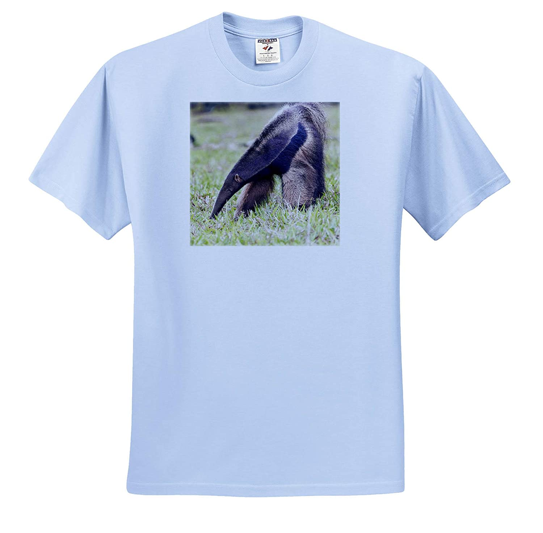 - Adult T-Shirt XL Brazil Mato Grosso do Sul Wildlife Near Bonito 3dRose Danita Delimont ts/_314074 Giant Anteater