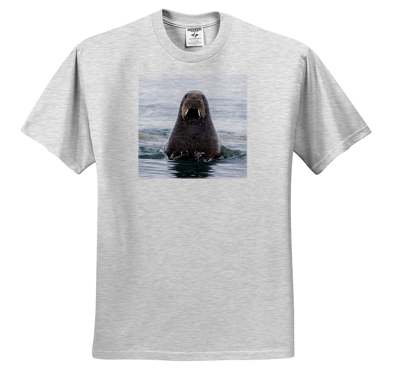 Walrus ts/_313804 3dRose Danita Delimont Svalbard Norway Arctic Adult T-Shirt XL Walrus Swimming