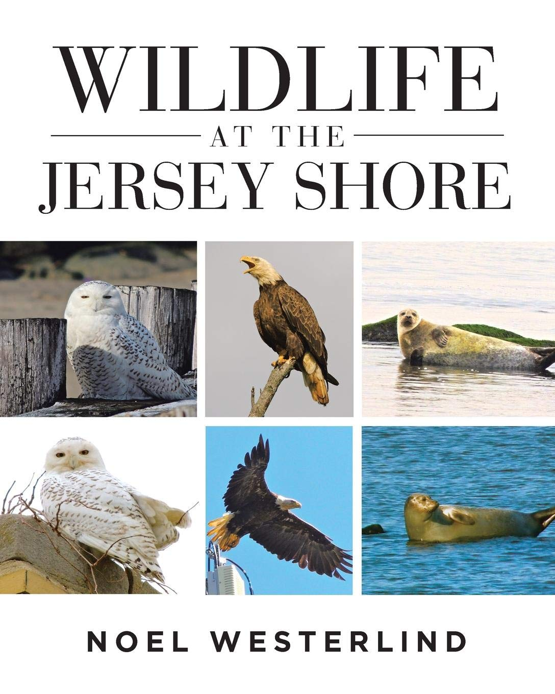 Download Wildlife at the Jersey Shore pdf epub