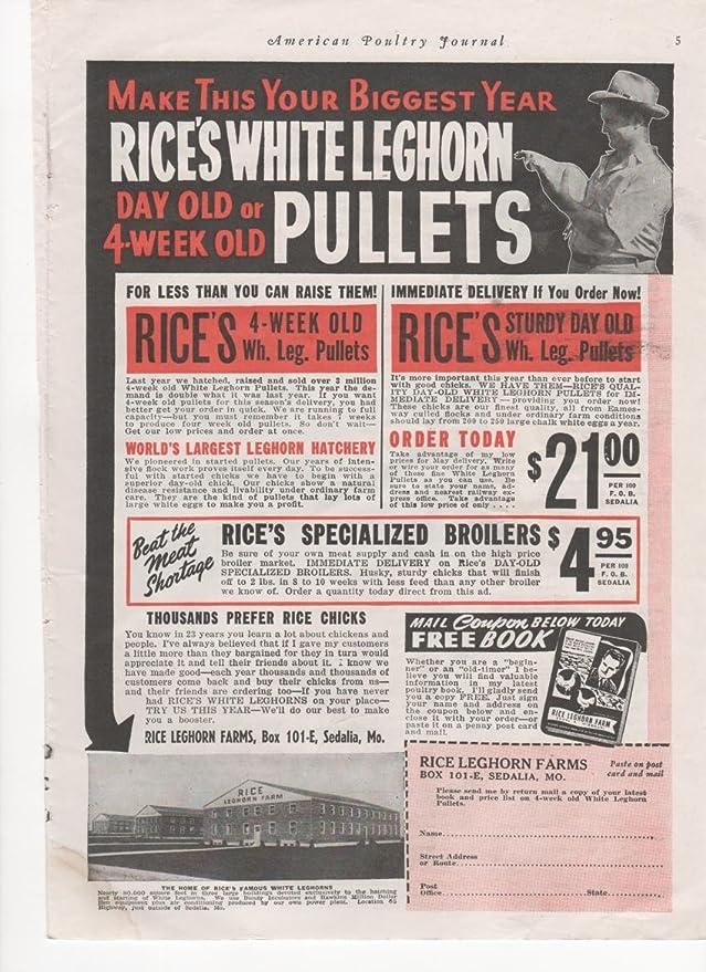 Amazon com: Rice's White Leghorn Pullets Chickens War Effort