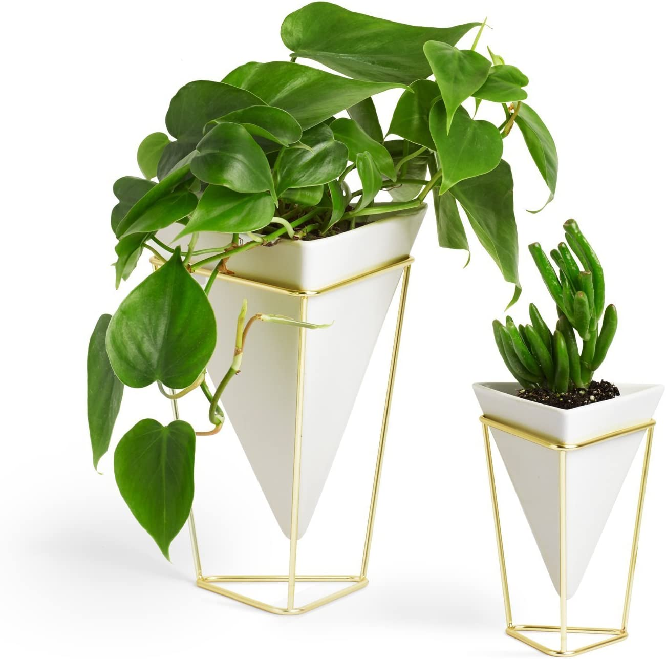 Umbra Trigg Desktop Planter Vase & Geometric Container - Great For Succulent Plants, Air Plant, Mini Cactus, Faux Plants and More, White Ceramic/Brass (Set of 2) (Renewed)