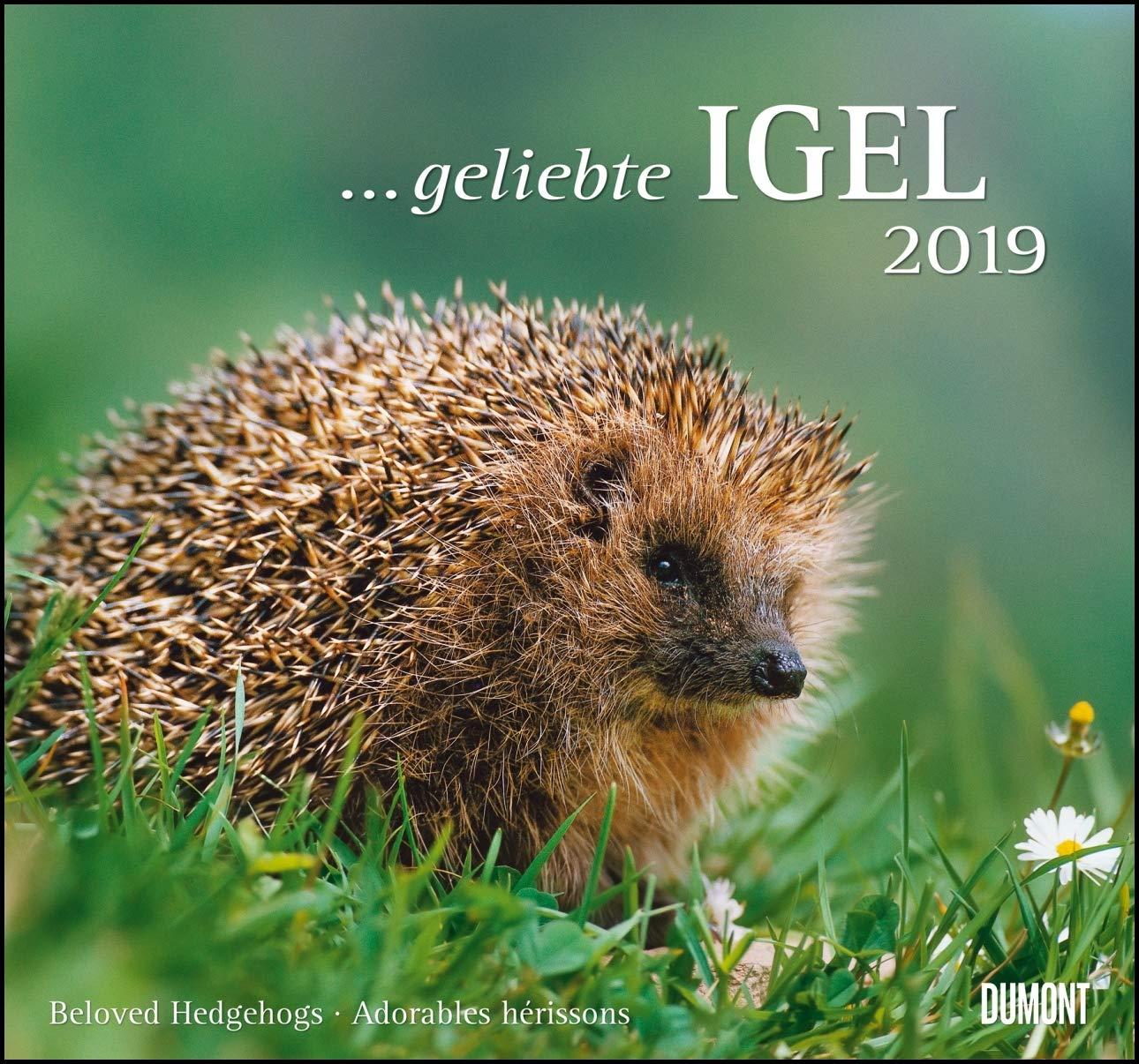... geliebte Igel 2019 - DuMont Wandkalender - mit den wichtigsten Feiertagen - Format 38,0 x 35,5 cm Kalender – 17. April 2018 DUMONT Kalenderverlag 3832041125 Garten / Pflanzen / Natur Igel (Kalender)