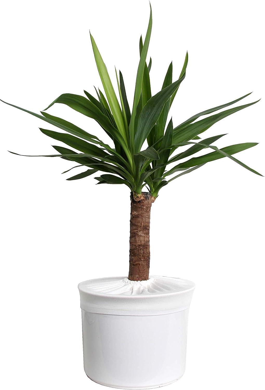 diameter: 35-37 cm, black Plant pot soil guard