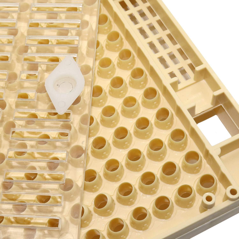XZANTE Ensemble de Tasse DApiculture Ensemble DOutils DAbeille de 120 Tasses de Cellules Syst/ème D/élevage Des Reines Cage de Receveur Compl/ète Nicot Abeille Assistant DApiculture