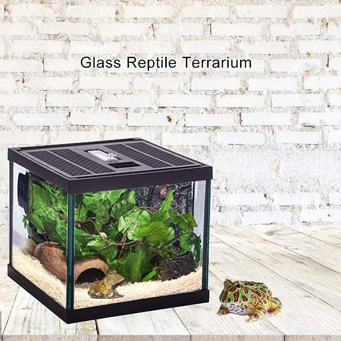 Cuttey - Terrario de cristal para reptiles, recipiente de comida para tortugas en caja de cristal natural y cómodo Pleasure