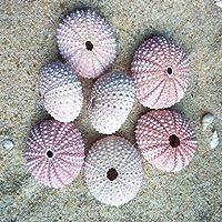 IMIKEYA 4pcs de Conchas de Erizo de mar