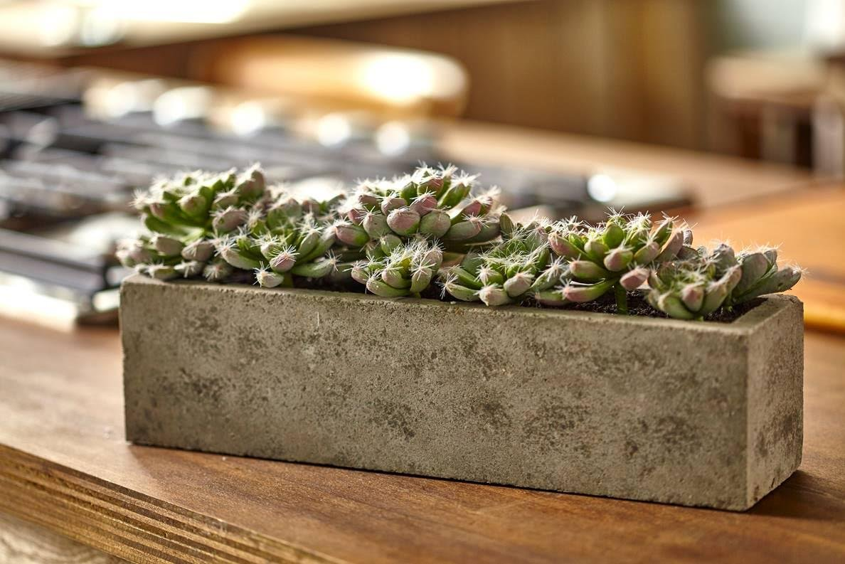 Amazon.com: Nearly Natural Succulent Garden with Textured Concrete ...