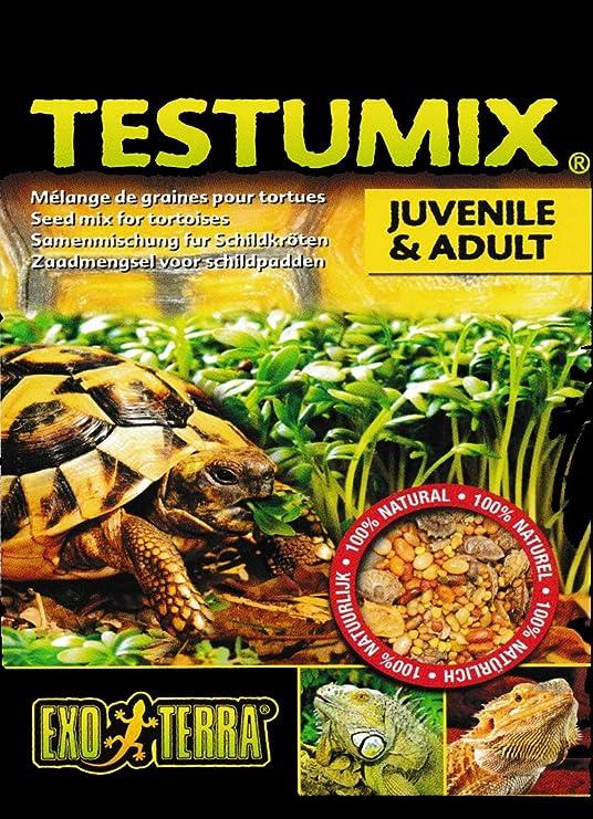 exoterra Mezcla de Semillas para Tortuga//Anfibios Reptiles 75 g: Amazon.es: Productos para mascotas