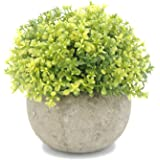 Velener Mini Plastic Artificial Pine Ball Topiary Plant with Pots for Home Decor (Green Clover)