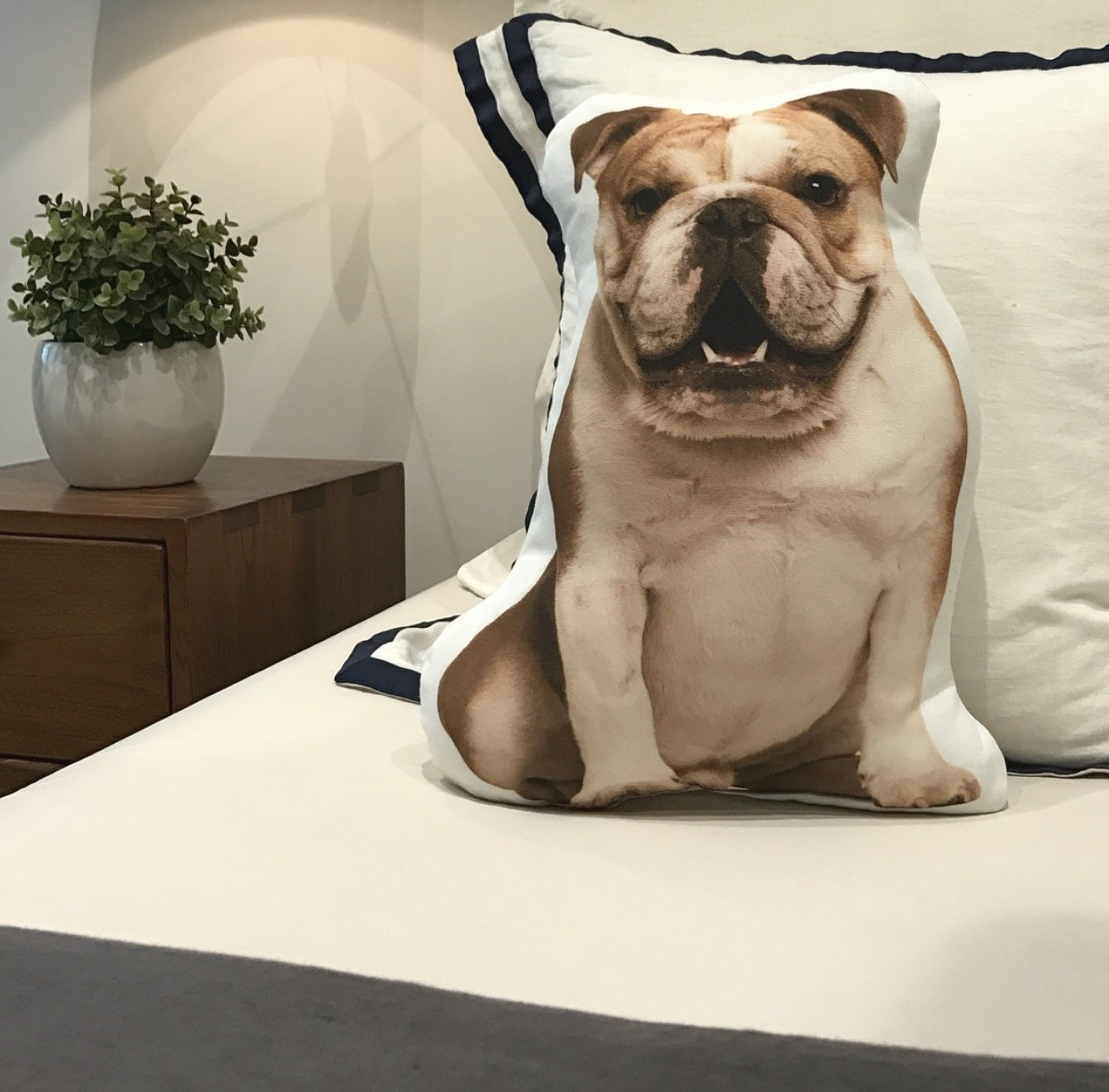 English Bulldog Shaped Pillow 16 x 12 Brown Cows Cushion Co