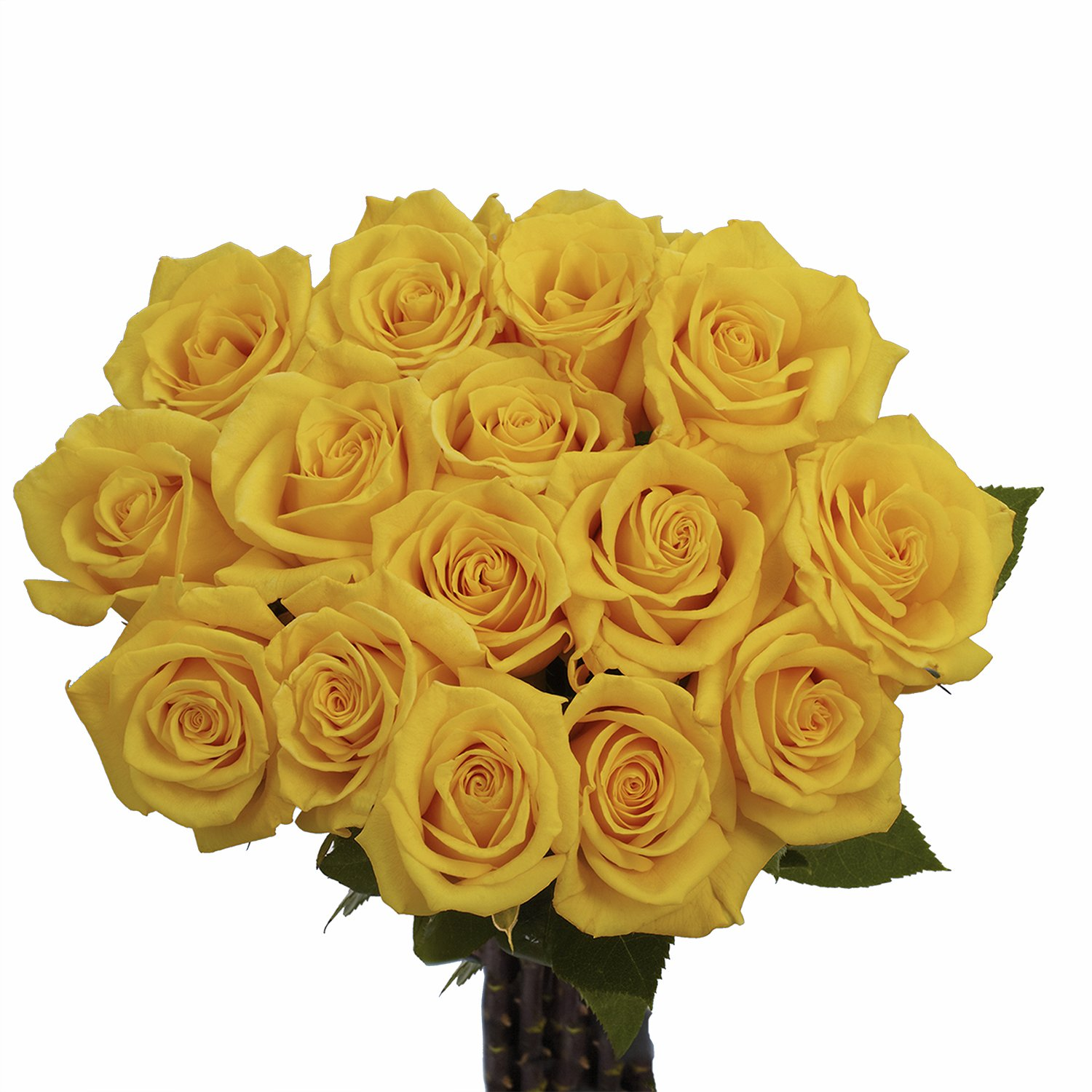GlobalRose Yellow Roses - Fresh Flowers Delivery- 50 Long Stems