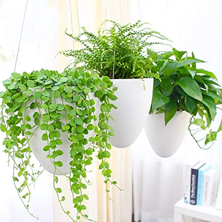 Sungmor Garden self watering Hanging Planter, Pack of 3 product image