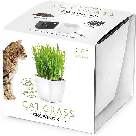Domestico Kit de Hierba gatera para cultivar, Cat grass growing kit, (Blanca), All-In-One set - hidrojardinera 13x13 cm, semillas testadas, sustrato fresco con nutrientes: Amazon.es: Jardín