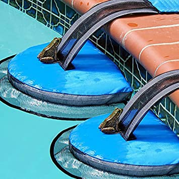 Amazon.com: ️ Yu2d ❤️❤️ ️Swimming Pool Animal Rescue ...