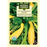 Seeds of Change 01068 Certified Organic Squash, Yellow Crookneck