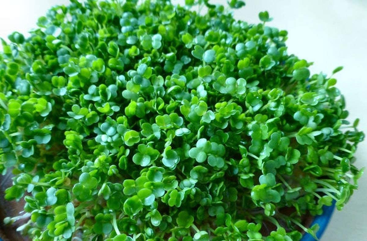 Potseed Las Semillas de germinación: 500 - Semillas: Las Semillas ...