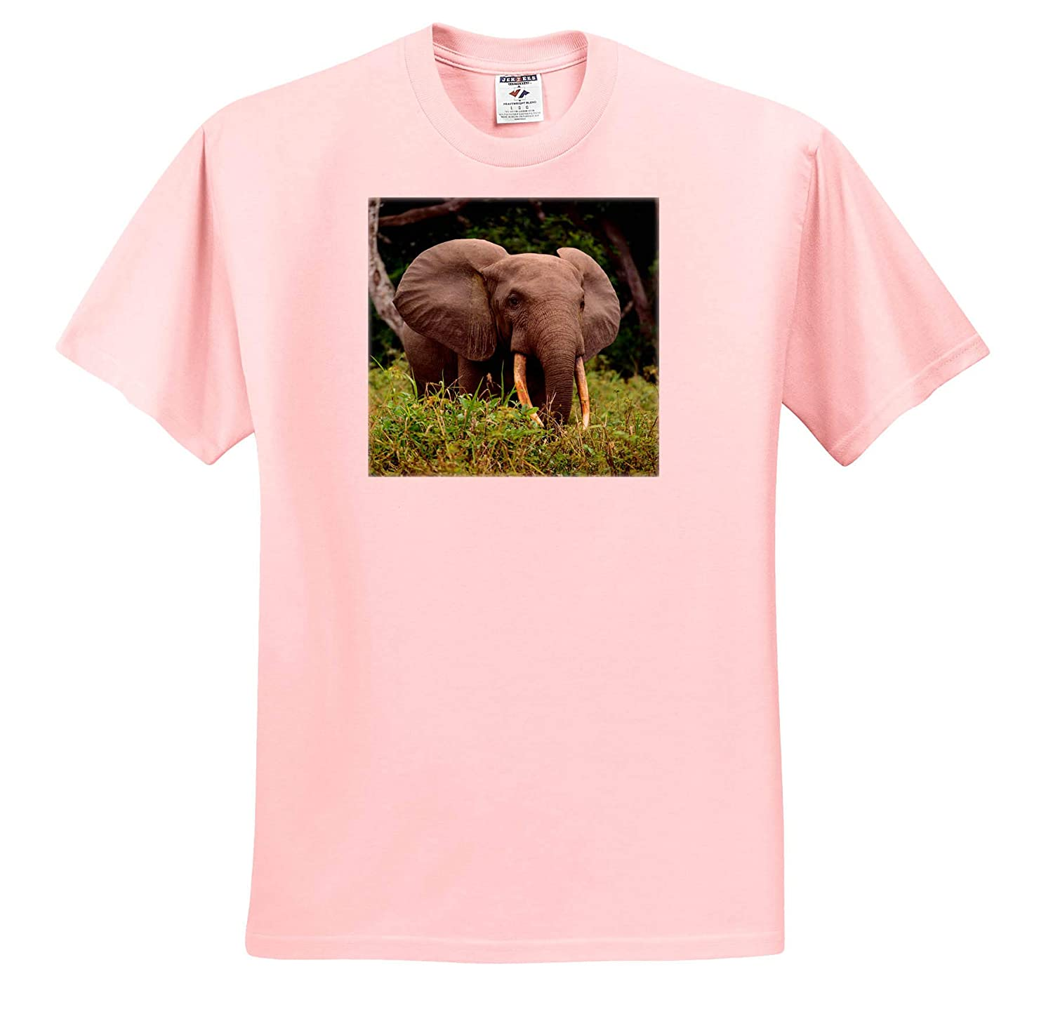 African Forest Elephant ts/_310397 Republic of The Congo 3dRose Danita Delimont Elephants Adult T-Shirt XL