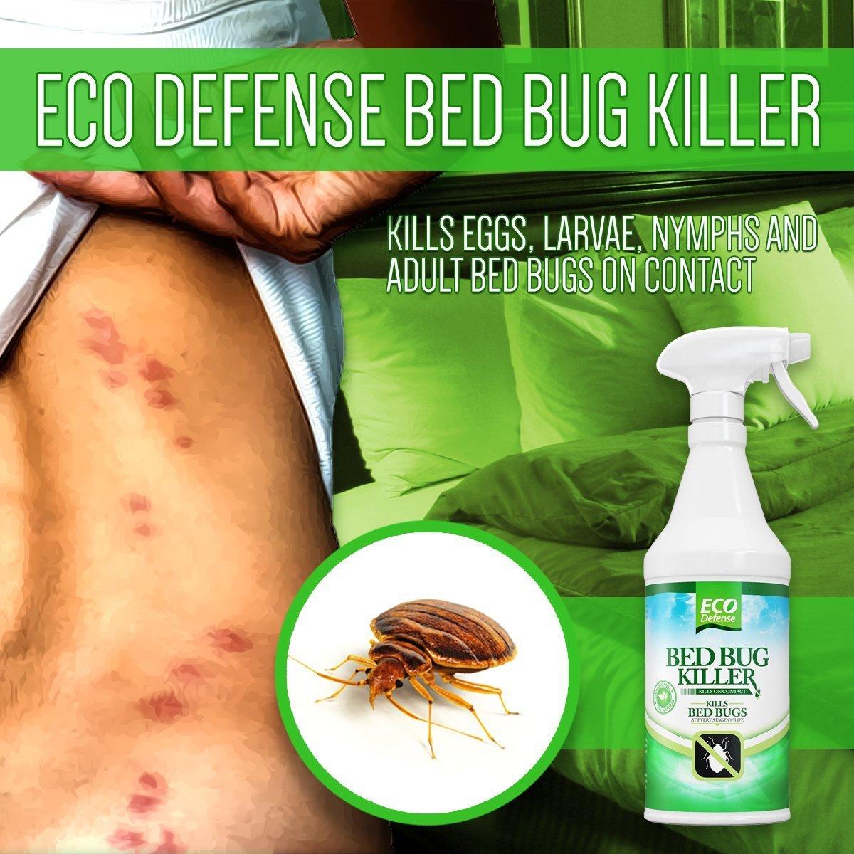 Amazoncom Eco Defense Bed Bug Killer Natural Organic Formula