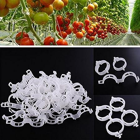 Amazon Com Plant Vegetable Garden Tomato Trellis Clips Vine