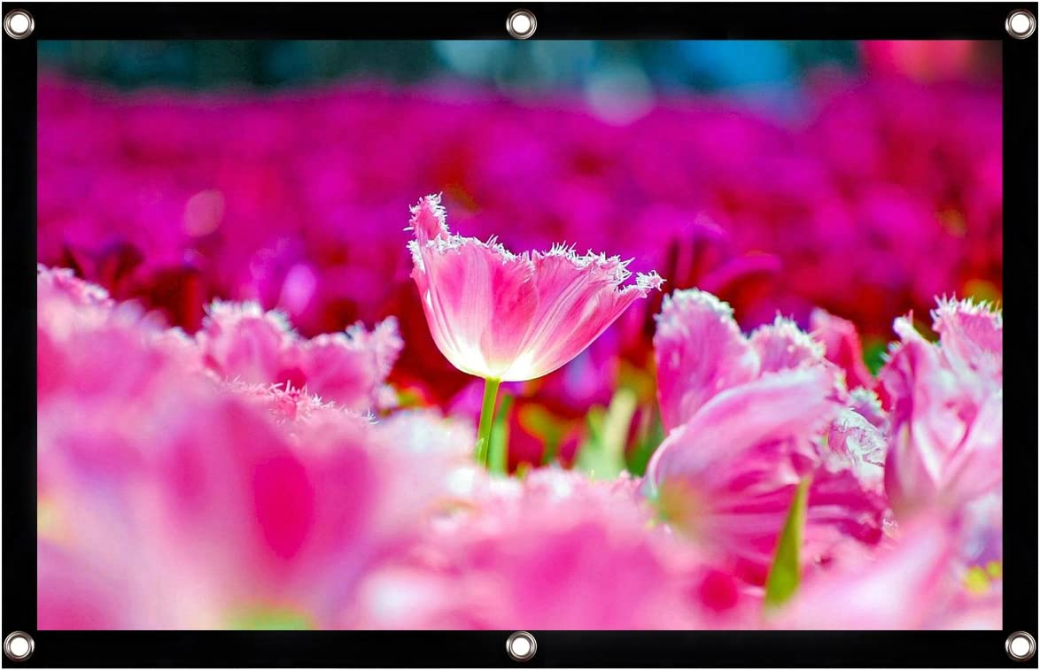 9 padgene Laptop Screen Projector HD Projector Screen 100/Inch 16