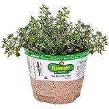 Bonnie Plants 5115 German Thyme Herb Plant
