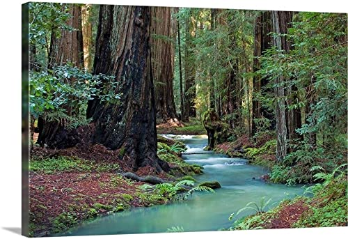 Redwood Forest II Canvas Wall Art Print