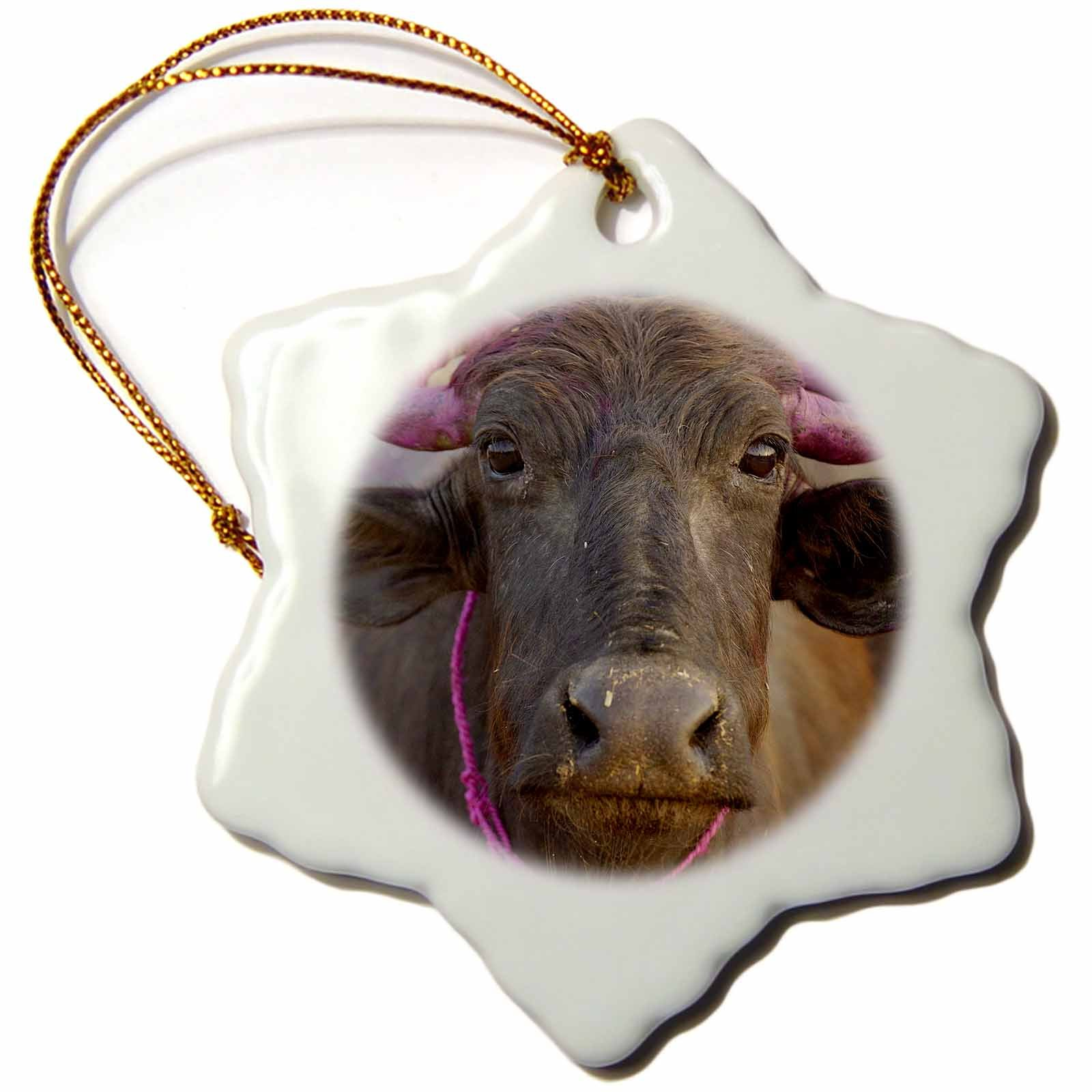 3dRose orn_70871_1 Water Buffalo, Diwali Hindu festival, Rajasthan, India AS10 POX0767 Pete Oxford Snowflake Porcelain Ornament, 3-Inch