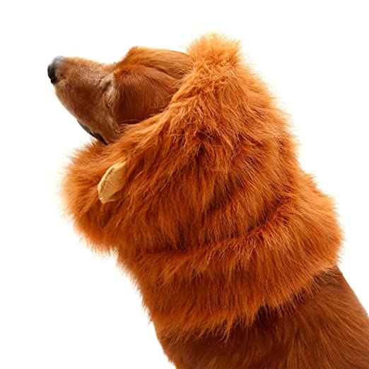 Amazon.com : eDealMax Fiesta de Halloween perro de mascota Grande ...