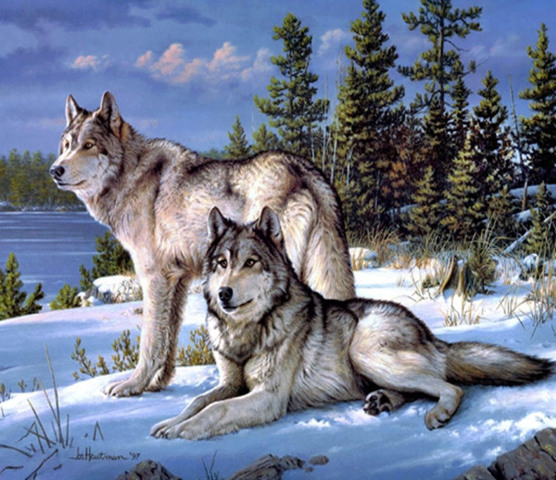 5d Pintura Por Diamantes (5250) Animal