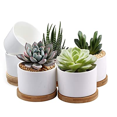 Succulent Pots, ZOUTOG White Mini 3.15 inch Ceramic Flower Planter Pot with Bamboo Tray, Pack of 6 - Plants Not Included : Garden & Outdoor