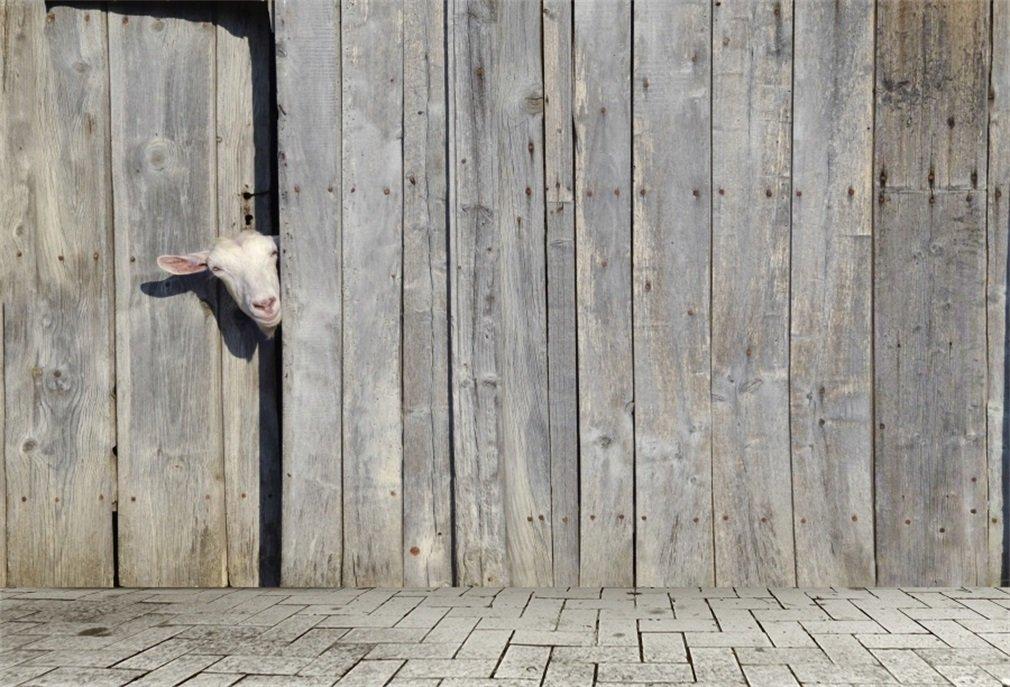 YongFoto 3x2m Telón de Fondo Cabra Curioso Que Mira A Escondidas A Través Puerta Cobertizo Madera Shabby Rustic Rural Gray Texture Fondo para Fotografia ...