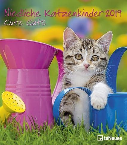 Bonito Gato Niños – Cute Cats – Calendario 2019 – teneues de Verlag – – Calendario de pared con bonitas gato bebés y espacio para entradas – 30 cm x 34 cm: Amazon.es: Oficina y papelería