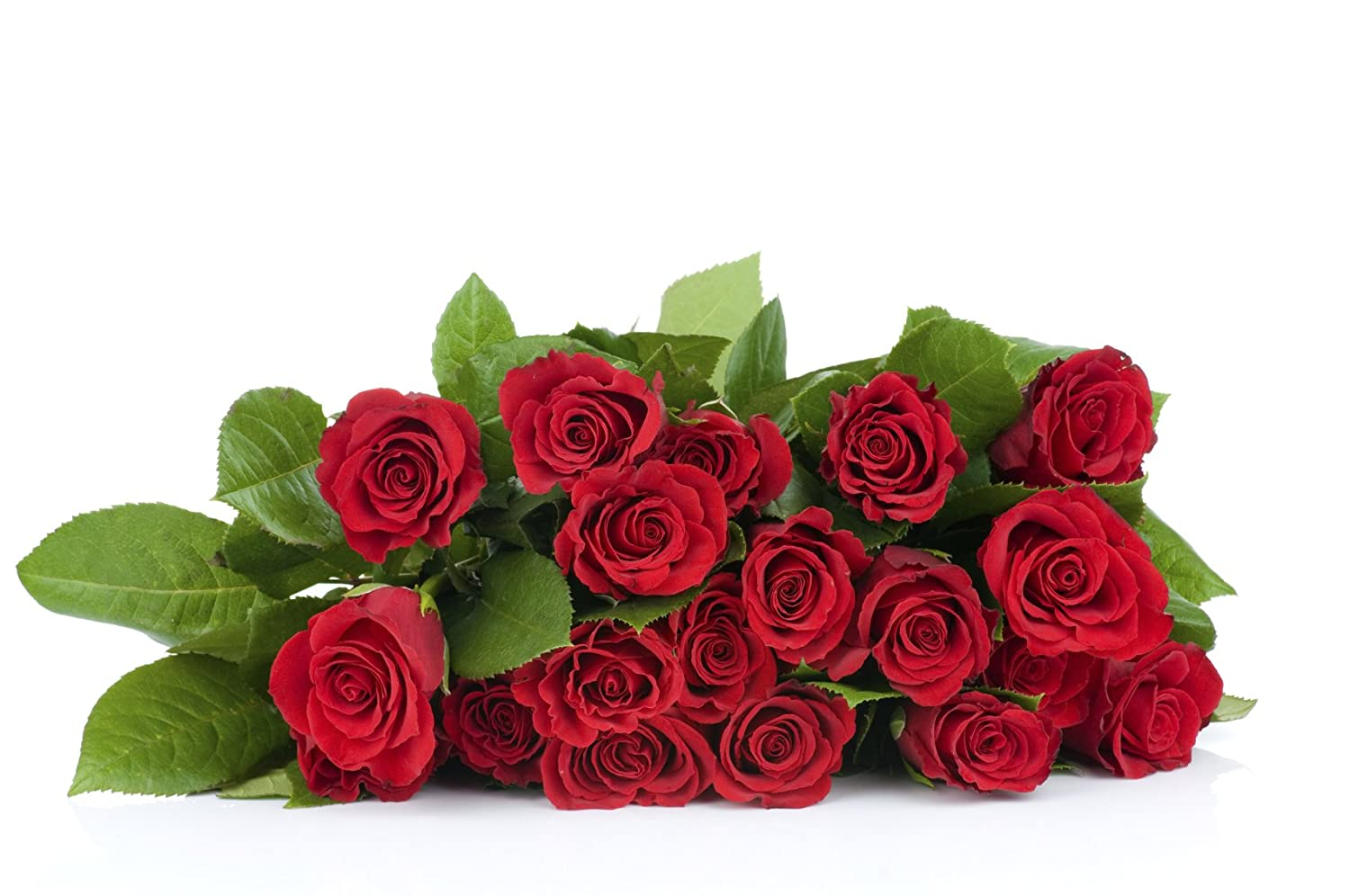 amazoncom 24 long stem red roses hand tied bouquet no vase everything else