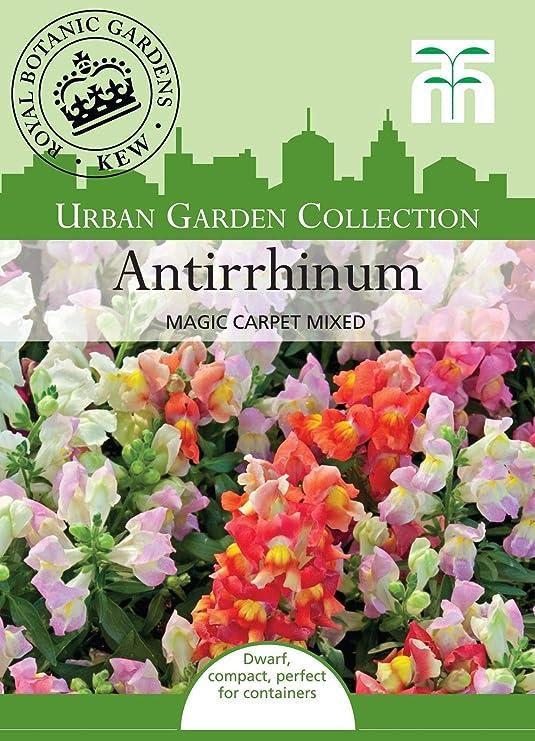Portal Cool Thompson & Morgan - Jardãn Urbano Flores - Antirrhinum ...