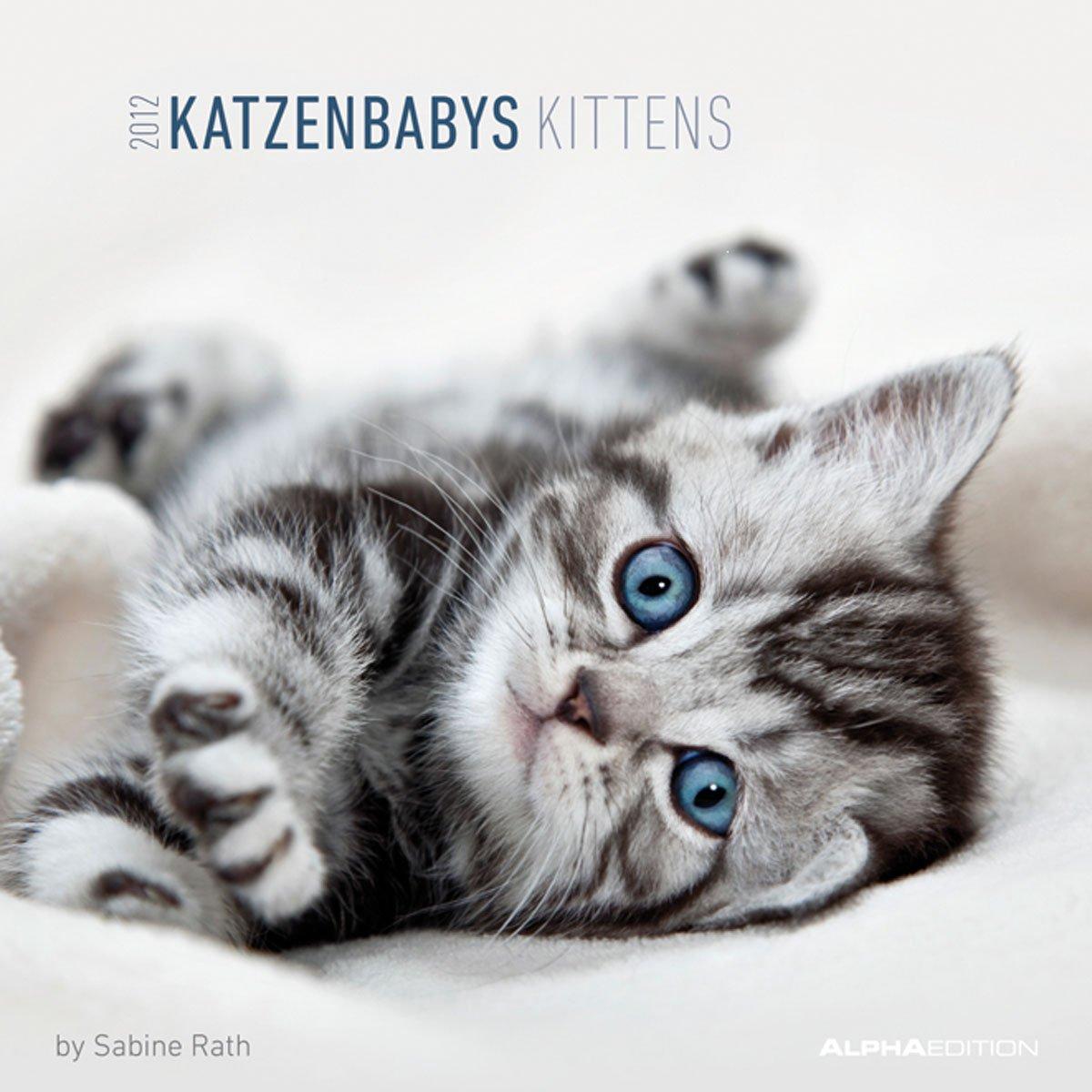 Katzenbabys 2012. Broschürenkalender 30 x 30 cm