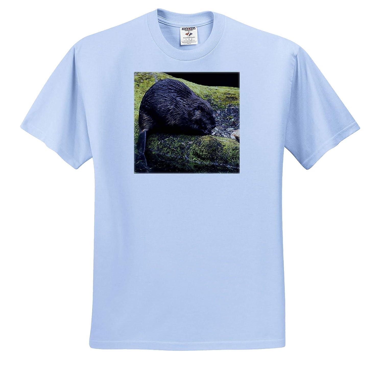 3dRose Danita Delimont Beaver with Cut Log Adult T-Shirt XL Beavers ts/_313995